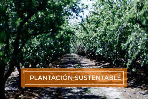 Plantación Sustentable